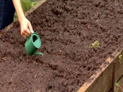 Как садить морковь чтобы не прореживать: правильные посадка и выращивание в открытом грунте