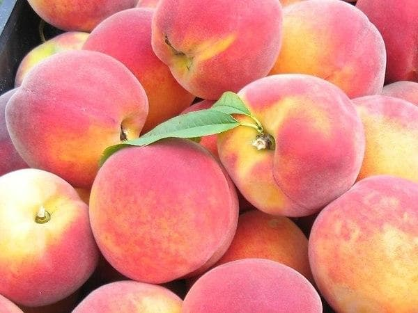 Сорта персика для подмосковья самоплодные