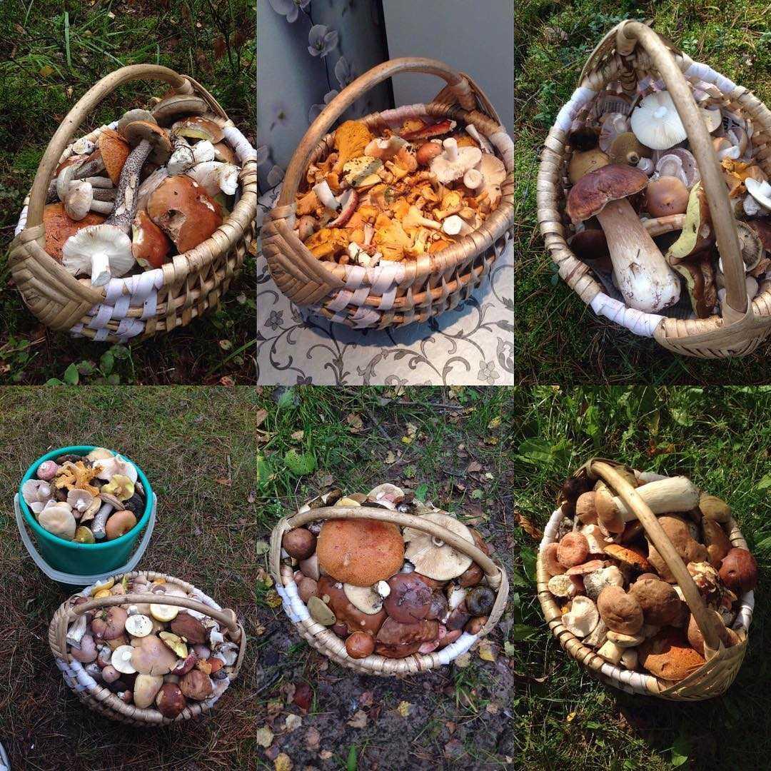 Гриб сморчок – когда собирать и где искать главный гриб весны - грибы собираем