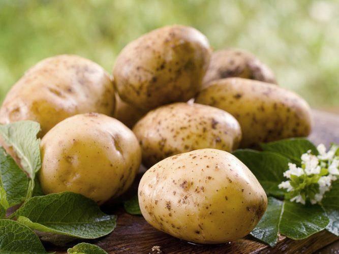 Подкормка картофеля во время и после посадки - как выбрать? | огородник чем удобрять картофель во время и после посадки? | огородник
