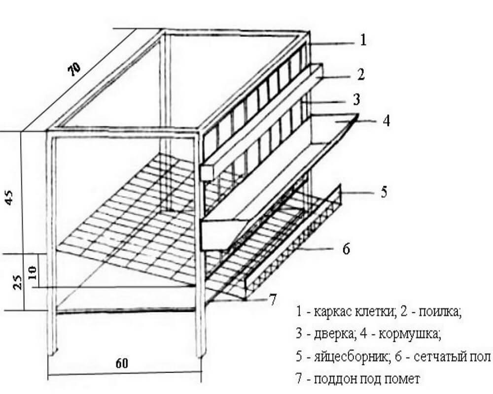 Бесплатная клетка для перепелов своими руками: чертежи-схемы