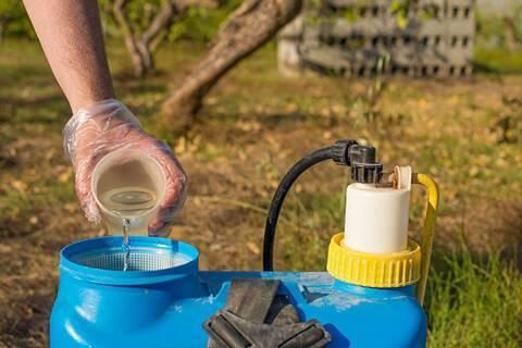 Обработка крыжовника осенью от вредителей и болезней