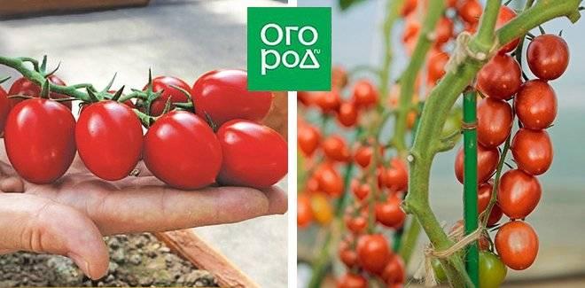 Сладкие сорта черри: фото, видео, описание, томаты с фруктовым вкусом