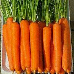 Морковь тушон: описание сорта, отзывы