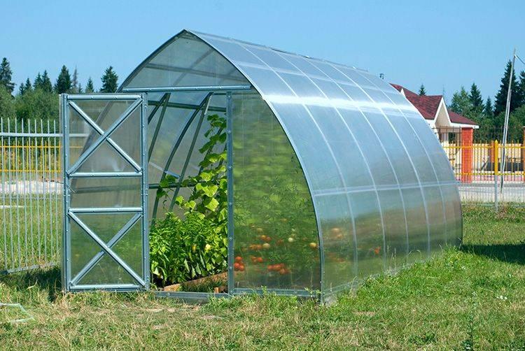 Поликарбонат для теплицы: лучший выбор для огорода