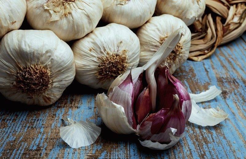Как правильно посадить зимний чеснок осенью и как ухаживать за озимым чесноком: как часто поливать и чем подкармливать зимний чеснок, чтобы не пожелтел, как пересаживать и когда выкапывать чеснок, посаженный осенью?   qulady