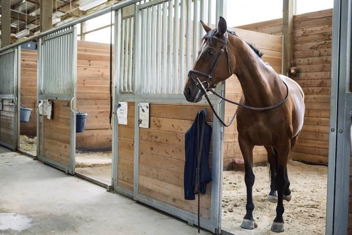 Зачем подковывают лошадей