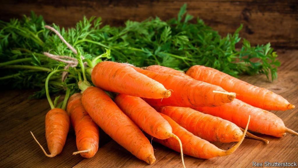 Почему у моркови оранжевый цвет – дачные дела