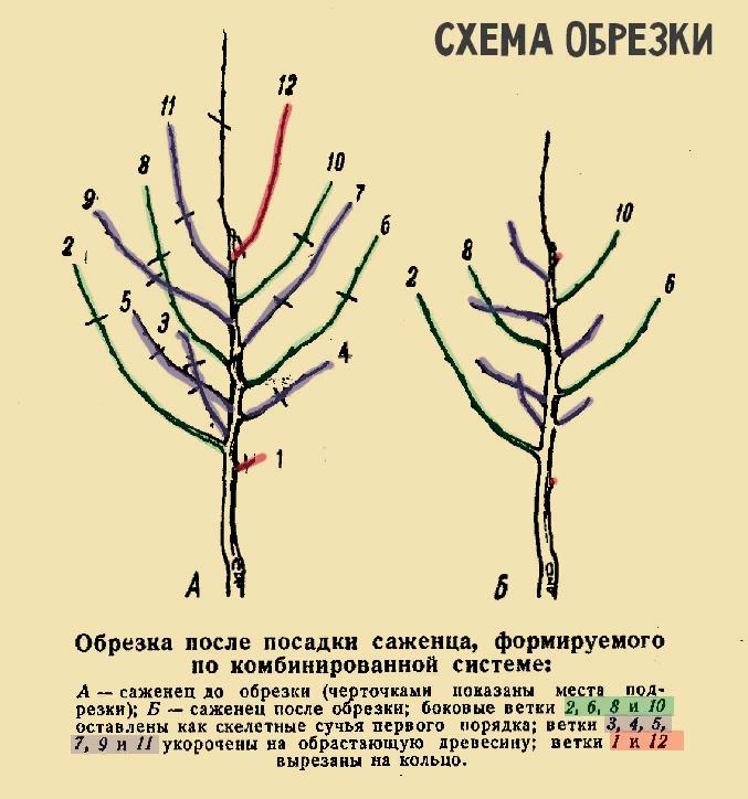 Хурма: выращивание и уход, выбор посадочного материала. как успешно вырастить хурму в своём саду или дома, даже из обычной косточки - секреты садоводов