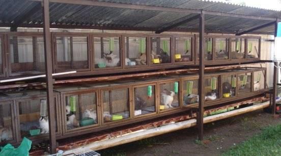 Устройство клетки для кроликов по методу Золотухина