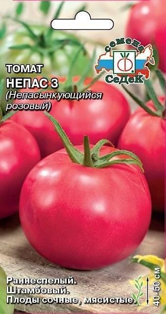 Особенности выращивания томата непасынкующийся