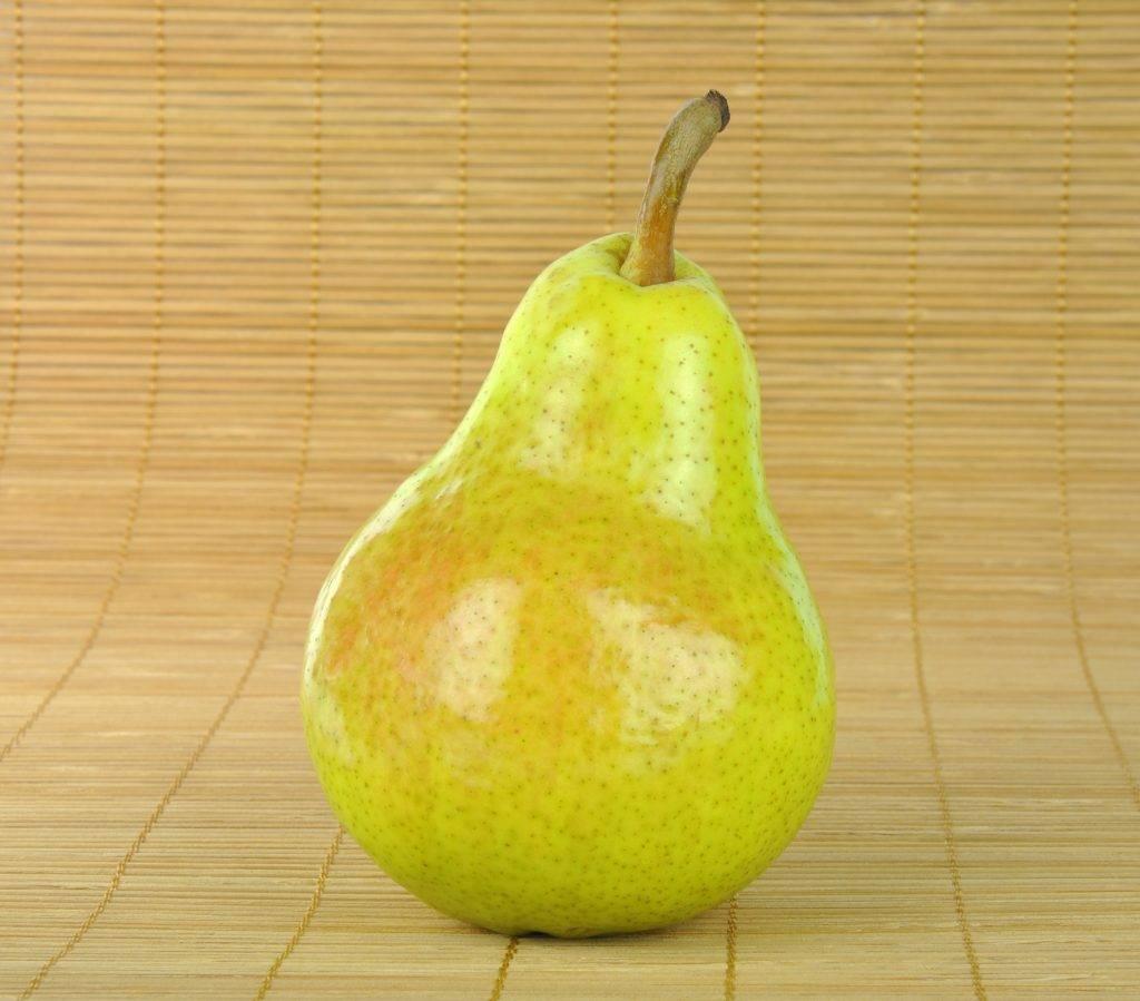 Груша бережённая: оберегает плоды от всех невзгод