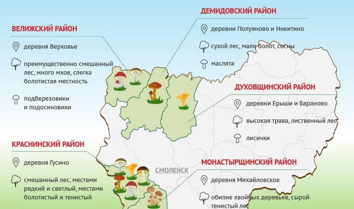 Грибы в краснодарском крае в 2021 году: лучшие места и сезон сбора