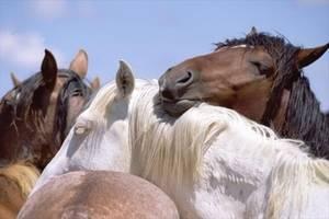 Как и сколько спят лошади и как создать оптимальные условия для их отдыха