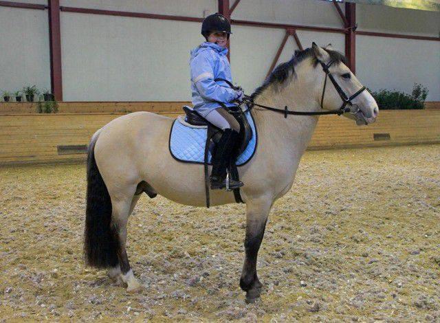Башкирская лошадь: описание, масти, характер, фото