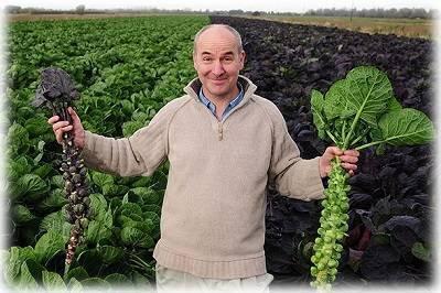 Агротехника выращивания брюссельской капусты из семян