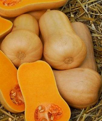 Тыква баттернат: полезные свойства мускатной тыквы