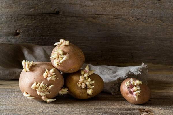 Настойка из ростков картофеля для суставов - польза, приготовление