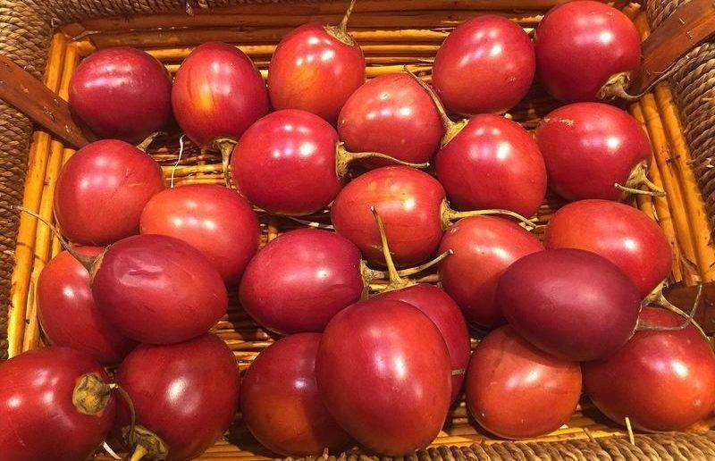 Томат мамонт – характеристика и описание сорта, фото, отзывы, урожайность, достоинства и недостатки