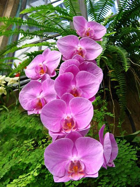 Желтая орхидея фаленопсис: фото сортов, их описание, особенности ухода, размножения и пересадки, а также способы борьбы с болезнями и вредителями selo.guru — интернет портал о сельском хозяйстве