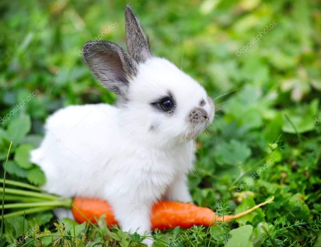 Интересные факты о кроликах для детей. 22 интересных факта о кроликах | интересные факты