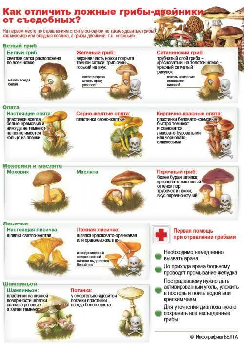 Как отличить съедобные грибы от несьедобных