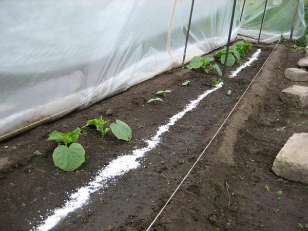 Подкормка огурцов в теплице из поликарбоната: чем удобрять при посадке, во время плодоношения?
