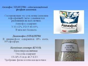 Удобрение аммофос: состав, инструкция по применению, как разводить