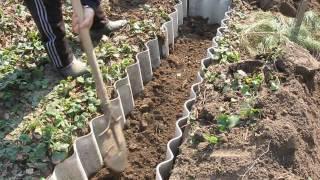 Посадка малины осенью как и когда посадить правильно