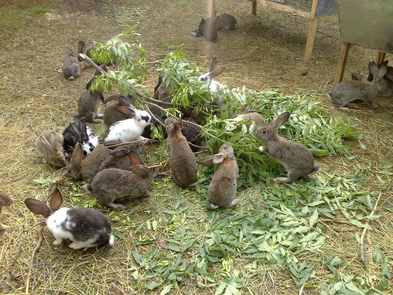 Чем можно и нельзя кормить кроликов? что дают кроликам для питания?