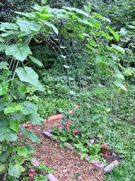 Необычные способы выращивания огурцов | во саду и в огороде