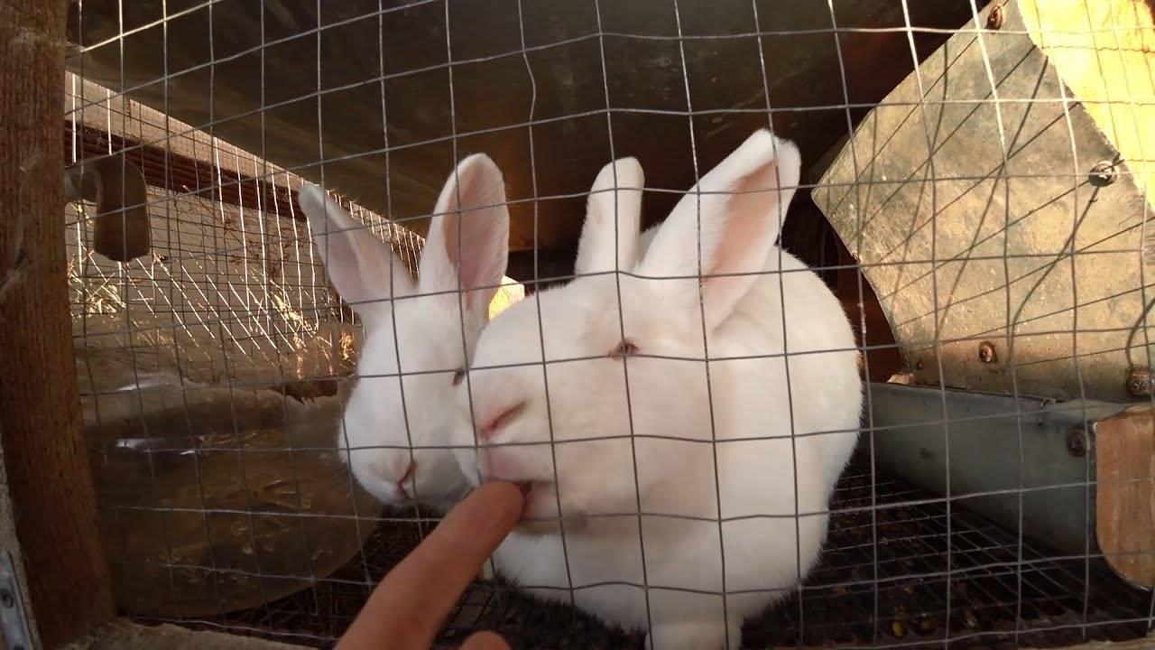 Причины укусов от кроликов и методы решения проблемы