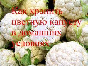 Как заморозить цветную капусту в домашних условиях и правильно делать заготовки на зиму, сколько хранить вареную и долго ли можно держать свежую в холодильнике?