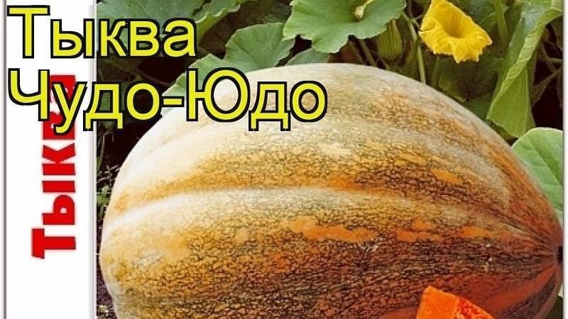 Сорта мускатной тыквы: выращивание и уход в открытом грунте, фото как выглядит и как формировать, посадка и уход, сроки созревания