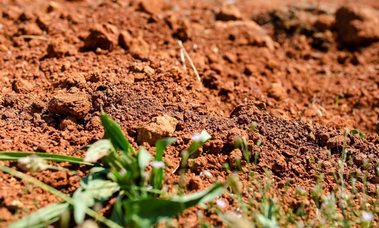 Кислотность почвы — как определить и раскислить. кислая почва. что делать? — ботаничка.ru