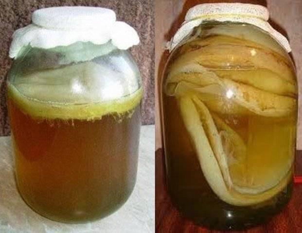 Чайный гриб: польза и вред для организма человека