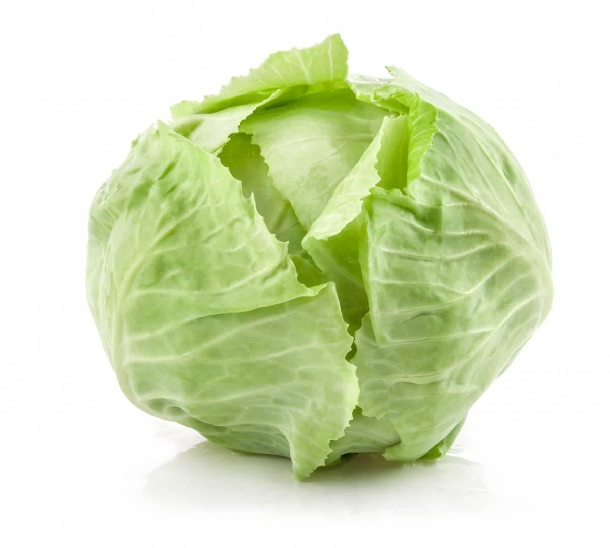 Голландские сорта белокочанной капусты: поздние, среднеспелые, ранние, килоустойчивые, лучшие для хранения