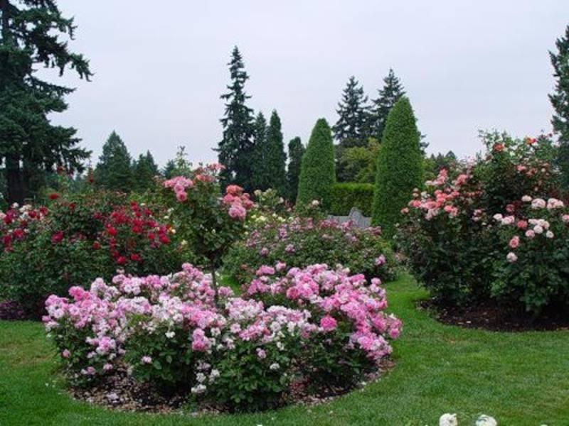 Розарий на даче — схемы расположения и красивые сочетания цветов для дачного участка (130 фото)