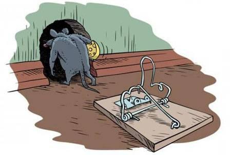 Как вывести мышей? какие способы действительно работают?