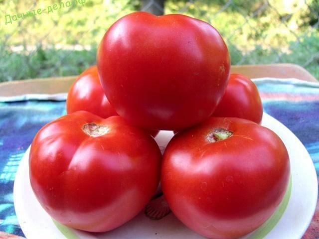 Томат красным красно f1: отзывы, посадка и уход, характеристика и описание сорта, урожайность + фото
