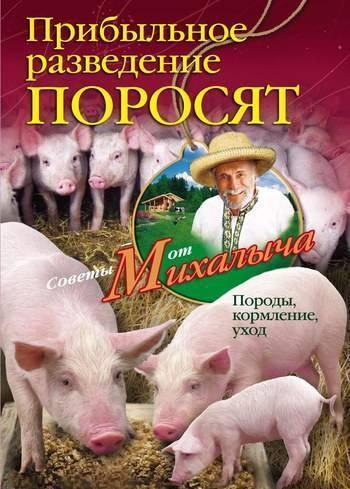 Супоросность свиньи: методы определения супоросности свиньи