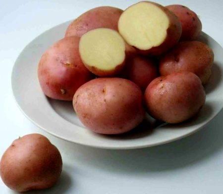 Картофель романо: описание сорта, фото полученного урожая, отзывы дачников с опытом, преимущества и недостатки картошки