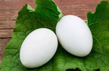 Гусиные яйца - польза и вред для здоровья