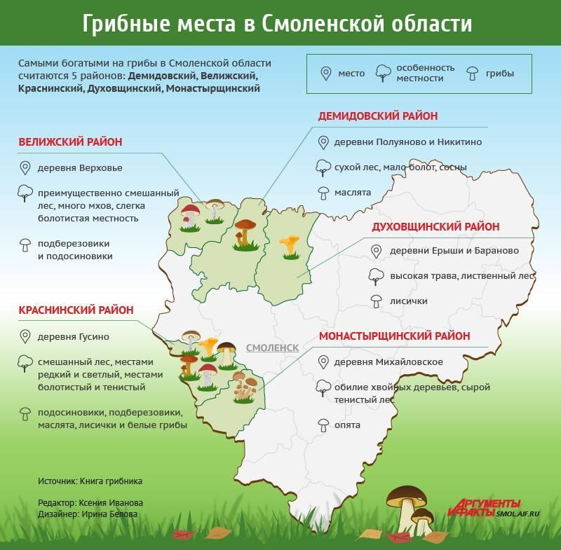 Грибы владимирской области 2020: грибные места, карта, фото