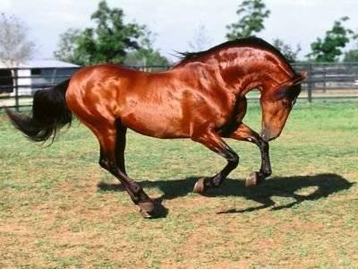 Масти лошадей. описание, особенности и названия мастей лошадей | живность.ру