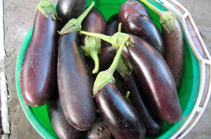Как убрать горечь из баклажанов перед готовкой: советы