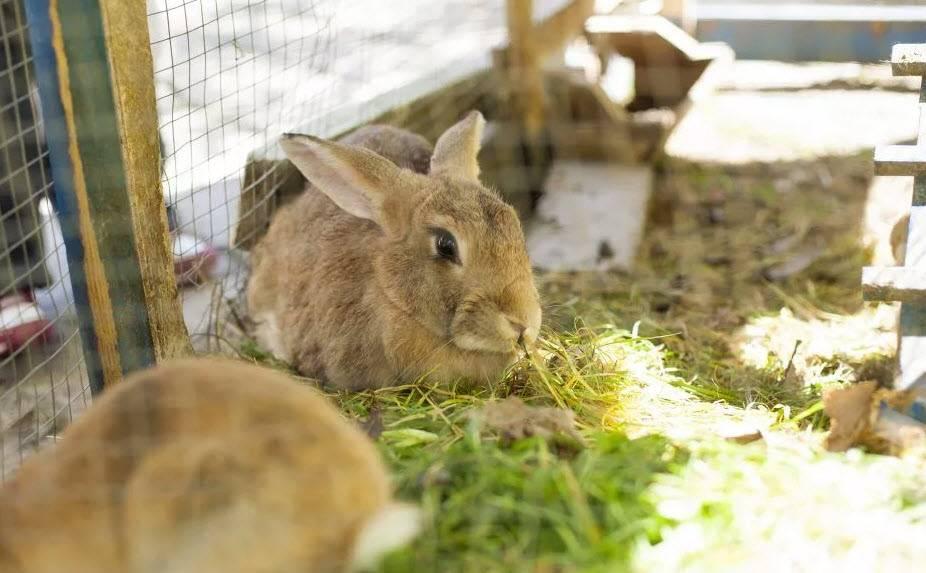 ᐉ новорождённые крольчата: внешний вид, уход, кормление, отсадка от крольчихи - zooon.ru