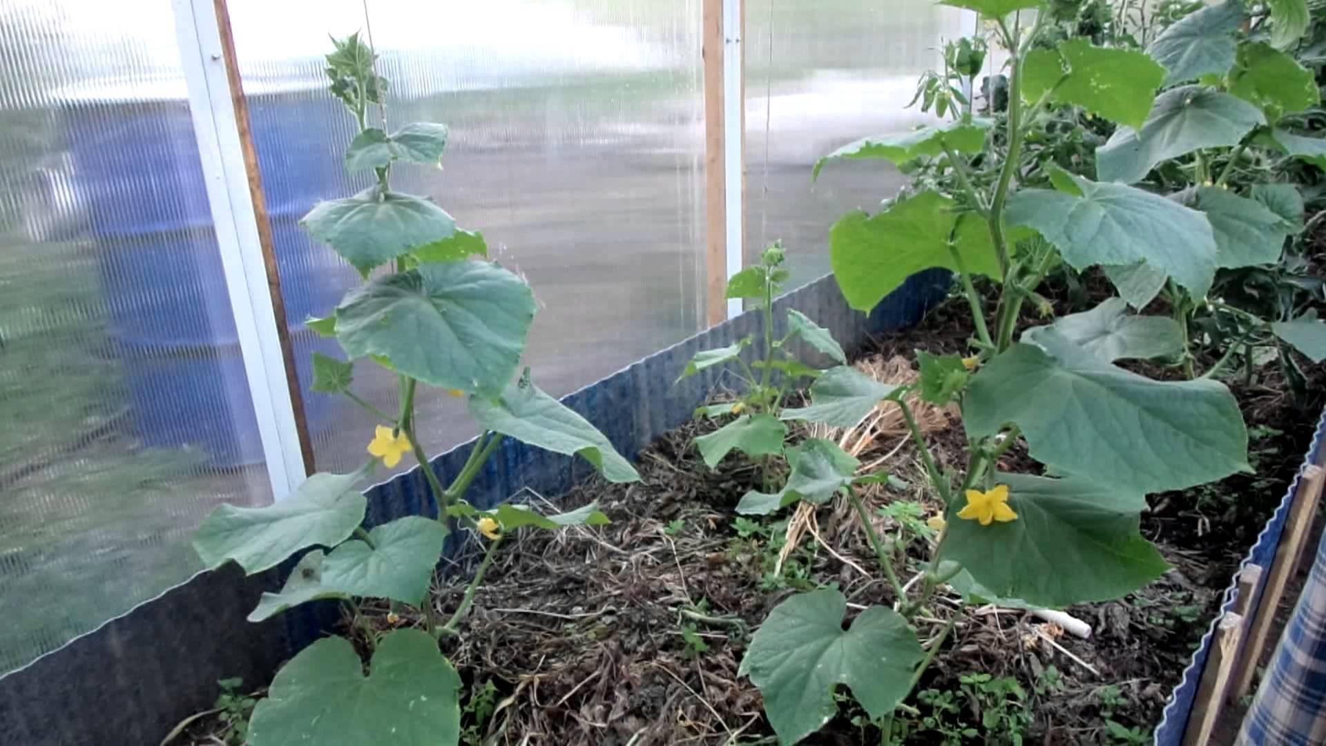 Приготовление дрожжей для подкормки растений: как удобрять дрожжами огурцы и помидоры, перцы, клубнику и цветы