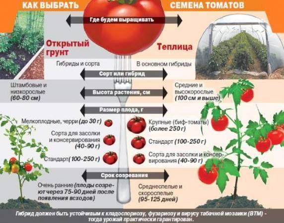 Детерминантный сорт помидор что это, какие существуют виды