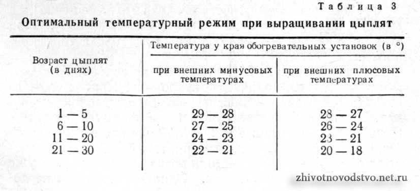Брудер для цыплят своими руками, таблица температуры для бройлеров, до какого возраста держат